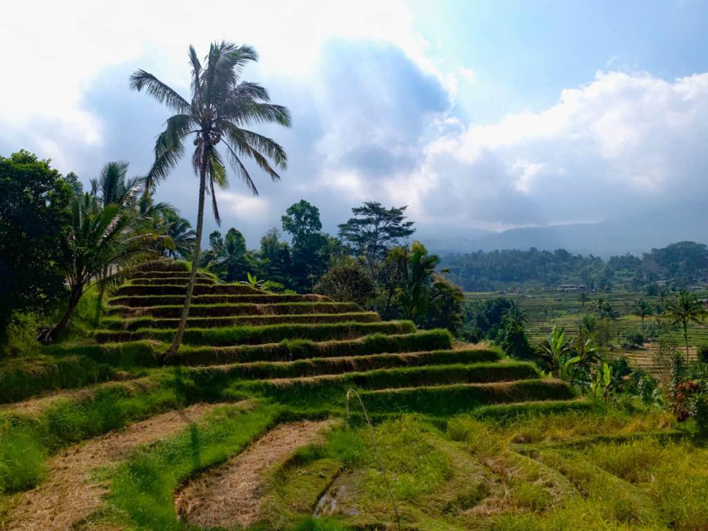 Jatiluwih Bali Rice Fields in Bali