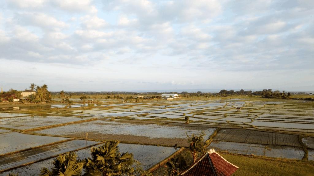 Canggu Rice Fields in Bali